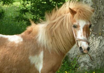 Pferde Liethshof
